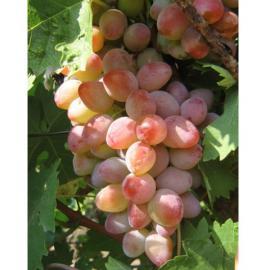 Виноград Аладдін