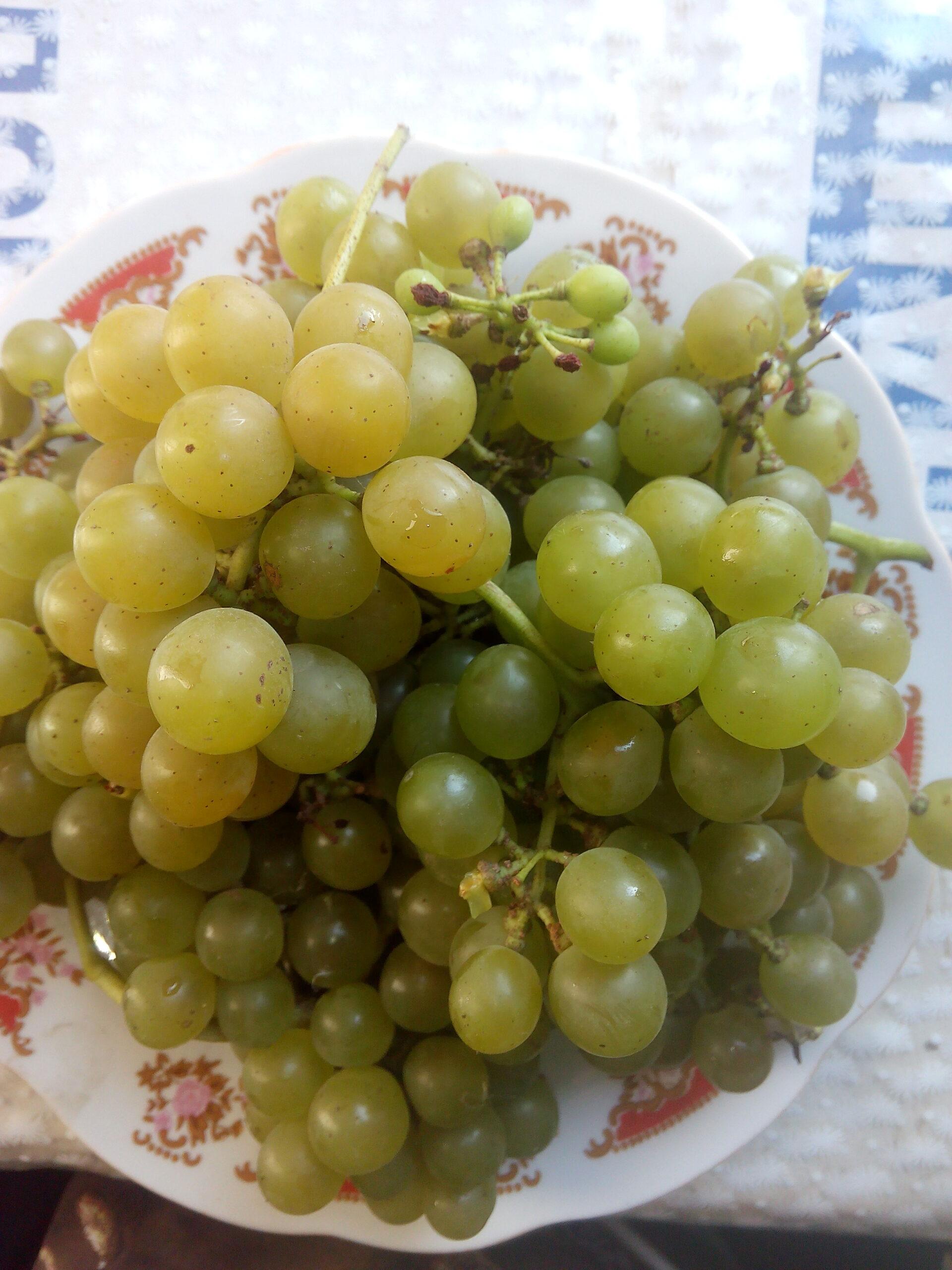 Виноград Мускат одеський