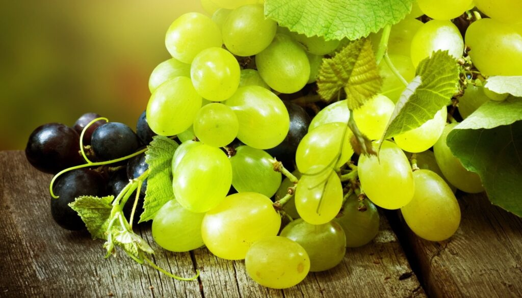 Виноград. Вирощування винограду.